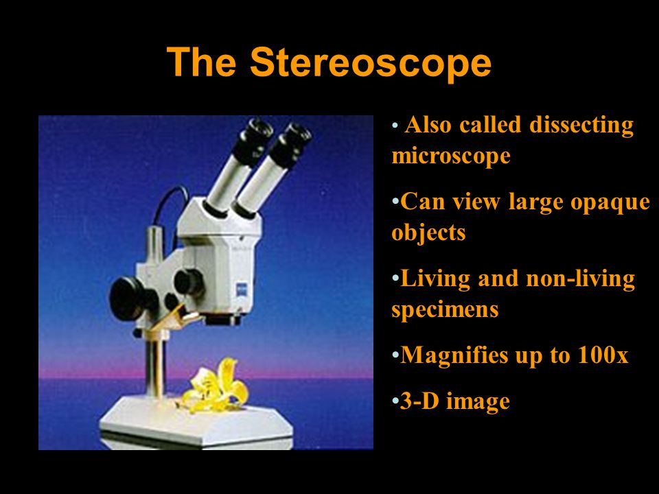 The Stereoscope Also called dissecting microscope Can view large opaque objects Living and non-living specimens Magnifies up to 100x 3-D image