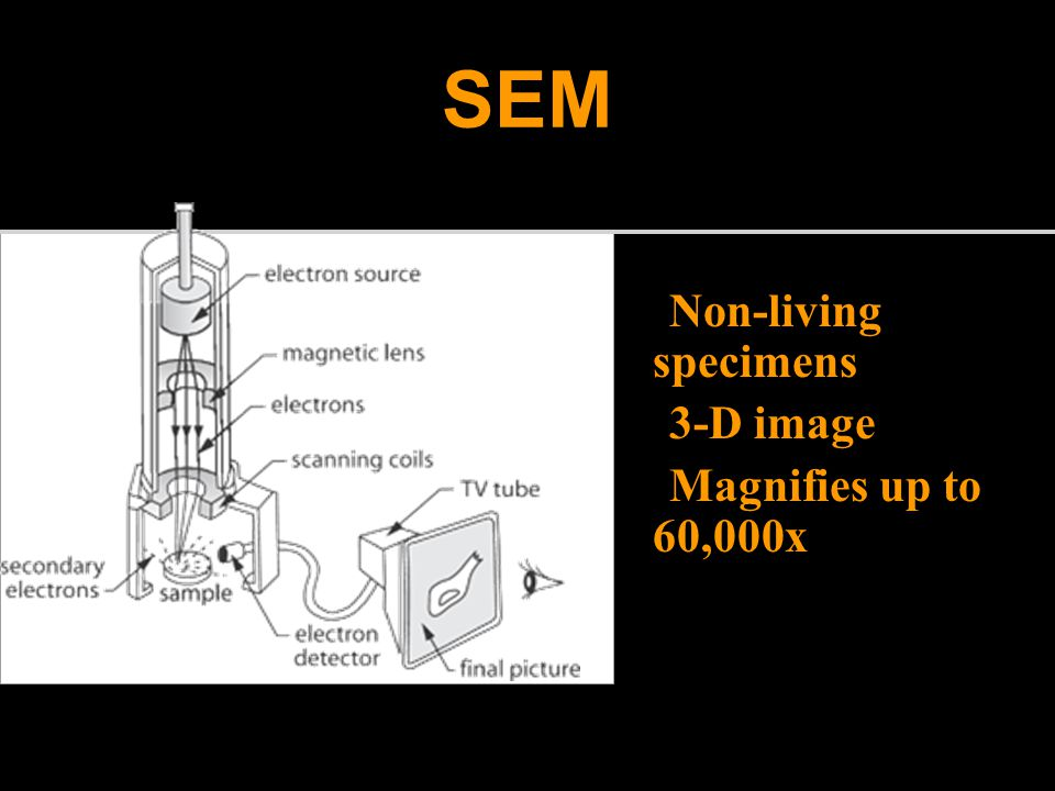 SEM Non-living specimens 3-D image Magnifies up to 60,000x