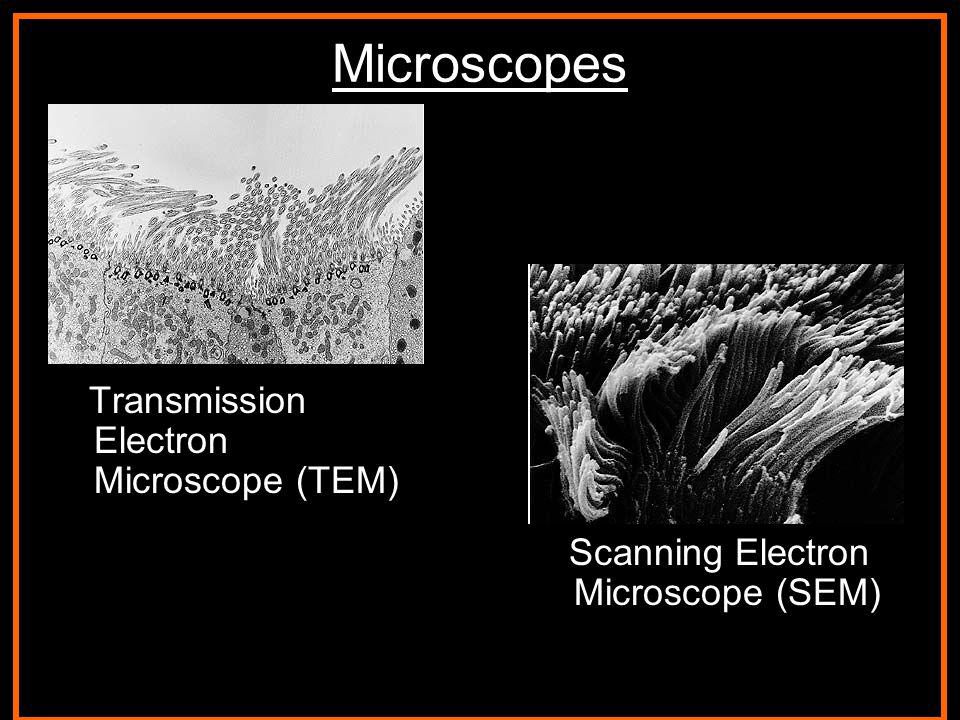 STM Barium, Copper, and Oxygen atoms