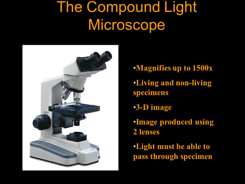 Parts of the Microscope Objectives Left- Scanning- 4x Middle-Low power-10x Right-High power-40x