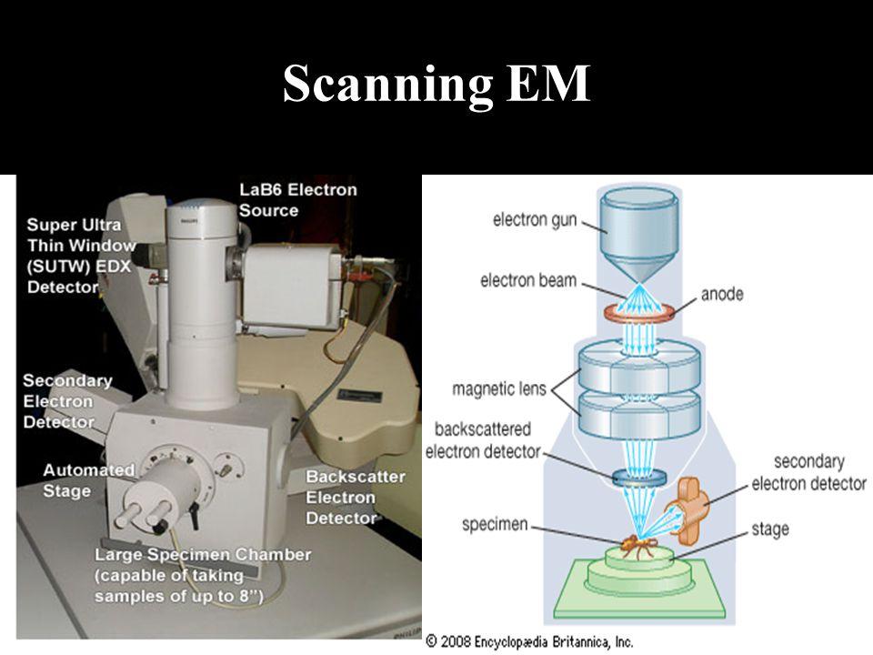 Scanning EM