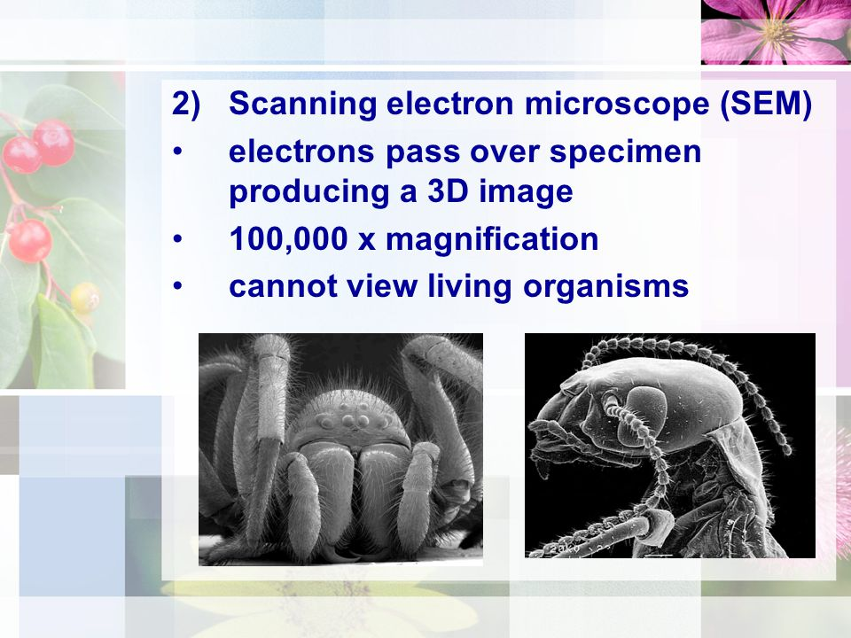 2)Scanning electron microscope (SEM) electrons pass over specimen producing a 3D image 100,000 x magnification cannot view living organisms