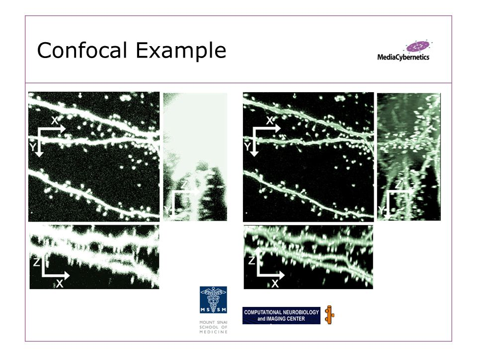 Confocal Example