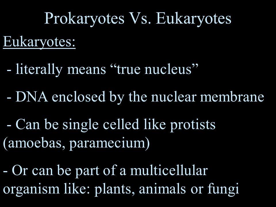 Prokaryotes Vs.