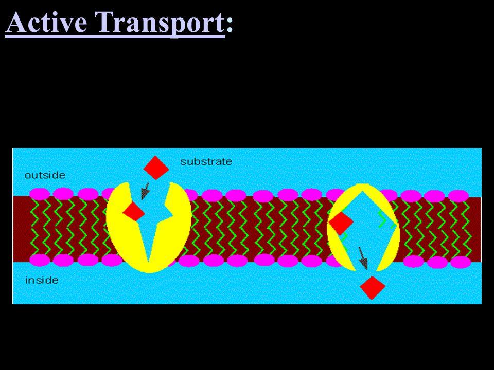 Active TransportActive Transport: