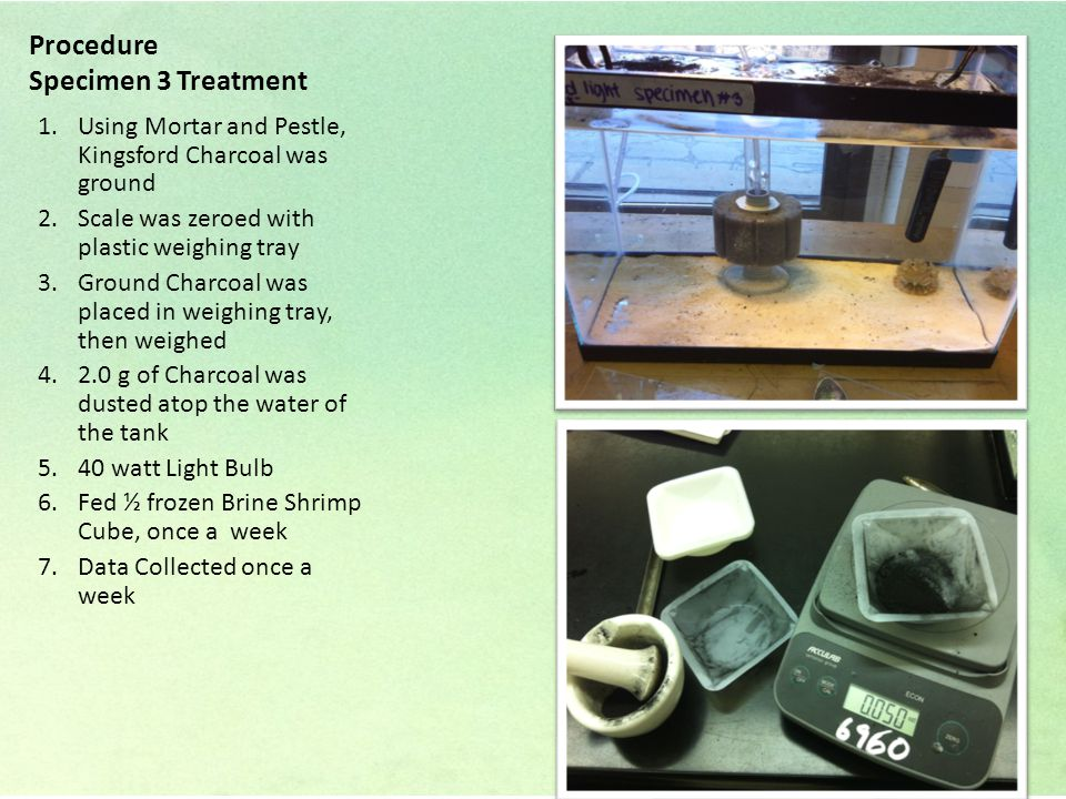 Procedure Specimen 3 Treatment 1.Using Mortar and Pestle, Kingsford Charcoal was ground 2.Scale was zeroed with plastic weighing tray 3.Ground Charcoal was placed in weighing tray, then weighed 4.2.0 g of Charcoal was dusted atop the water of the tank 5.40 watt Light Bulb 6.Fed ½ frozen Brine Shrimp Cube, once a week 7.Data Collected once a week