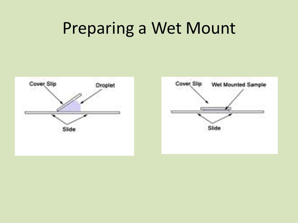 Preparing a Wet Mount