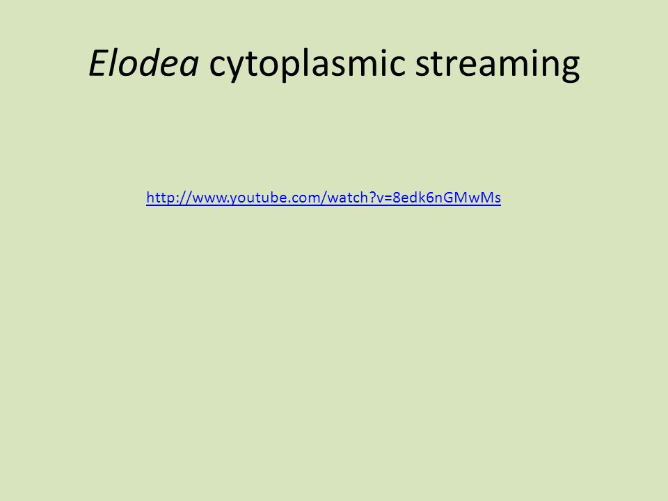 Elodea cytoplasmic streaming http://www.youtube.com/watch?v=8edk6nGMwMs