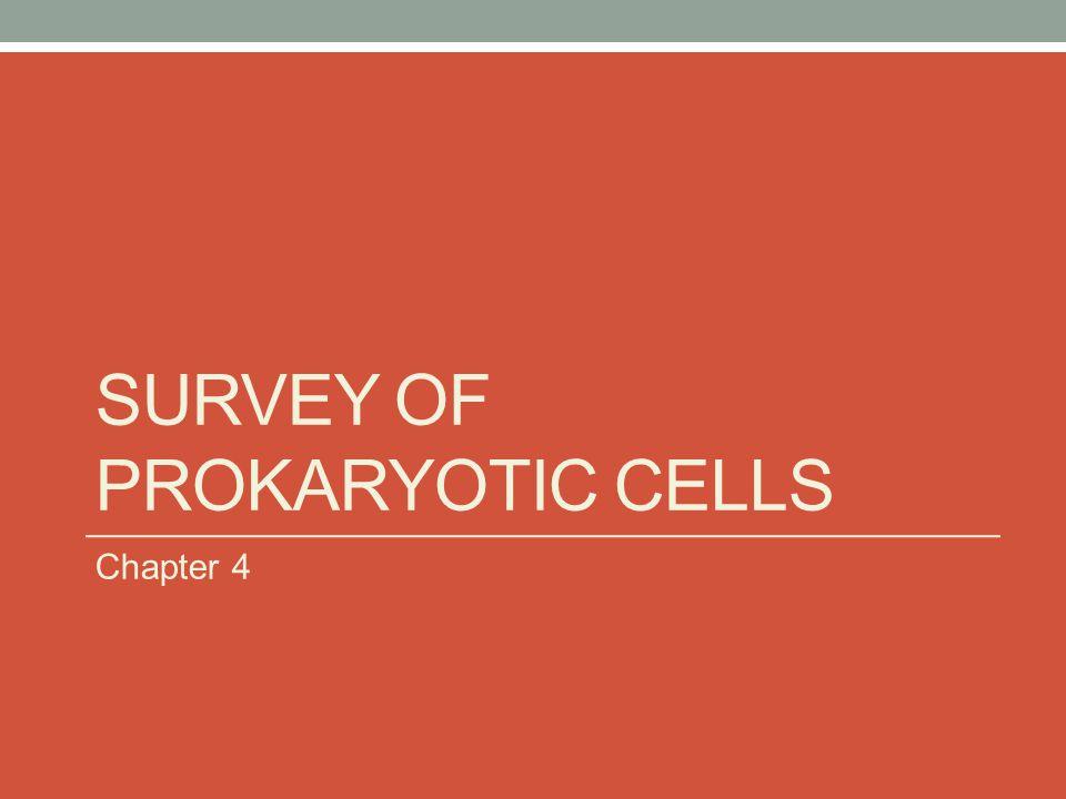 SURVEY OF PROKARYOTIC CELLS Chapter 4