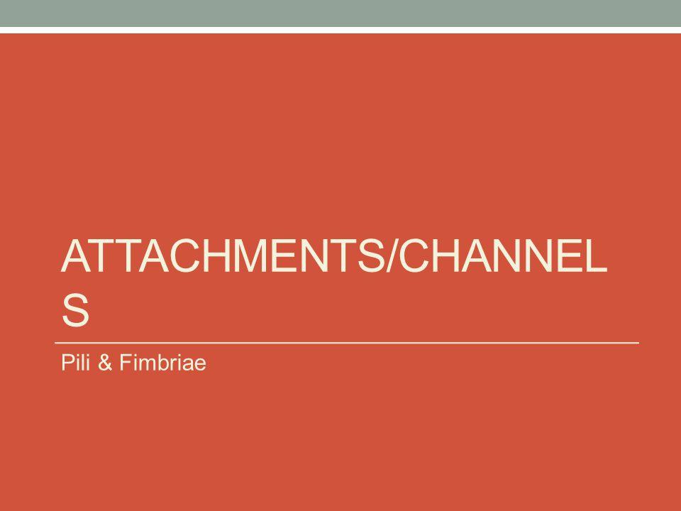 ATTACHMENTS/CHANNEL S Pili & Fimbriae