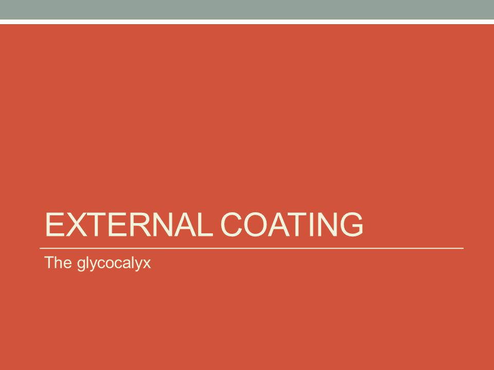 EXTERNAL COATING The glycocalyx