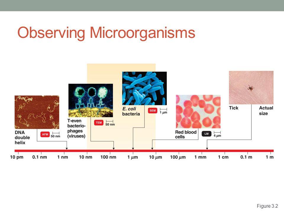 Observing Microorganisms Figure 3.2