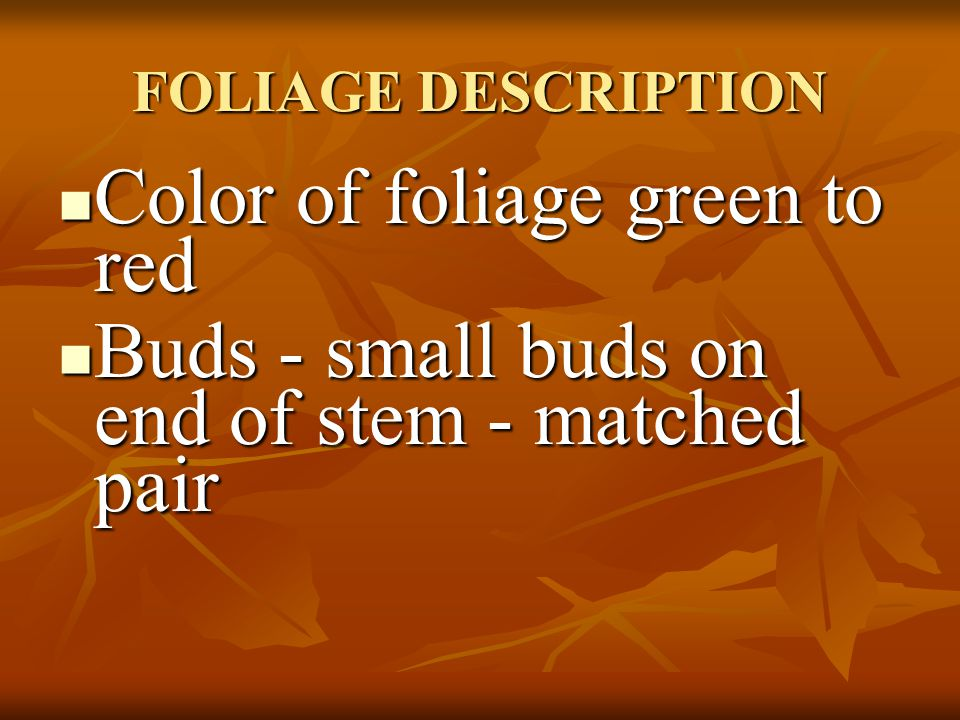 FOLIAGE DESCRIPTION Leaves are 5 - 7 lobed depending on variety Leaves are 5 - 7 lobed depending on variety Doubly serrated Doubly serrated Green, Red, or Variegated depending on cultivar Green, Red, or Variegated depending on cultivar