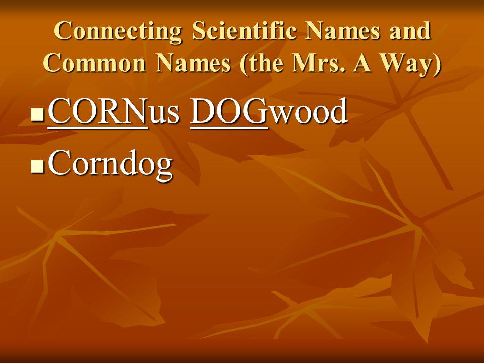 Common Name Flowering dogwood Flowering dogwood