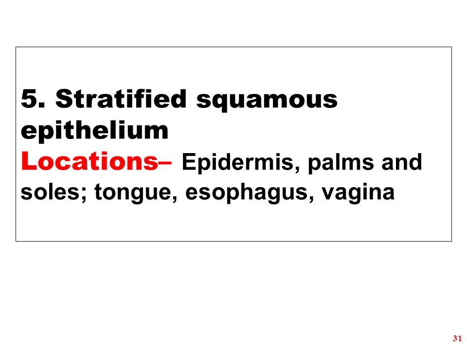 5. Stratified squamous epithelium Locations– Epidermis, palms and soles; tongue, esophagus, vagina 31