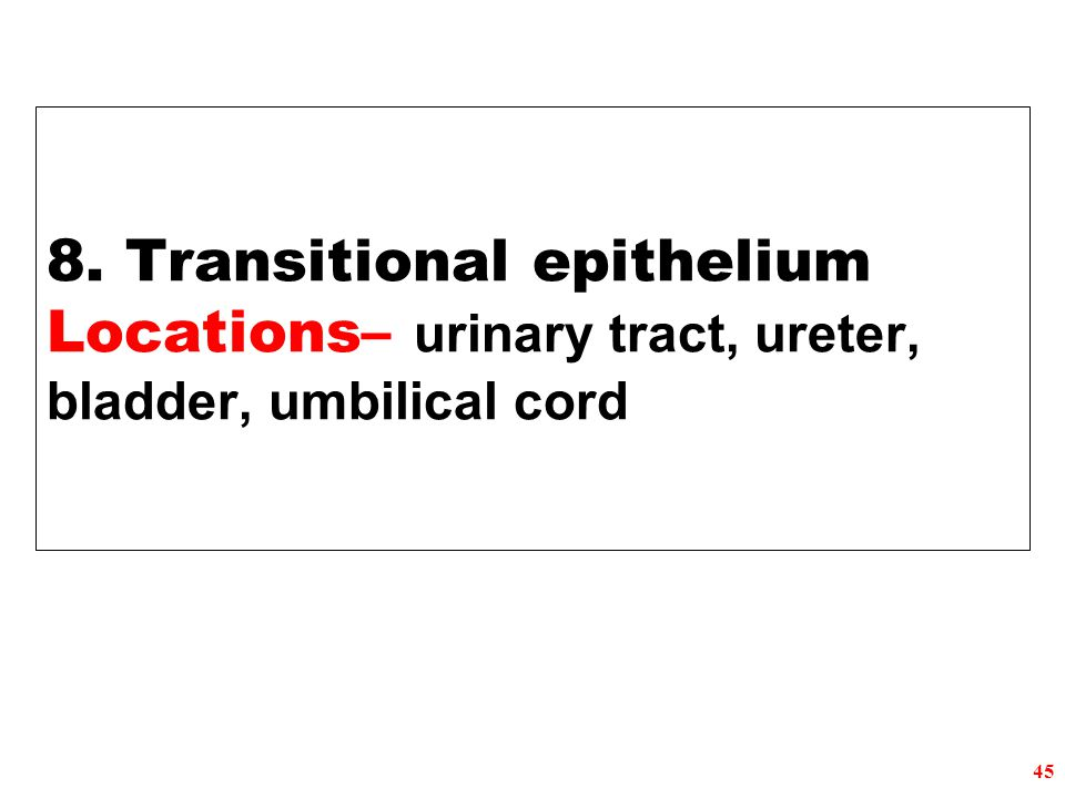 8. Transitional epithelium Locations– urinary tract, ureter, bladder, umbilical cord 45