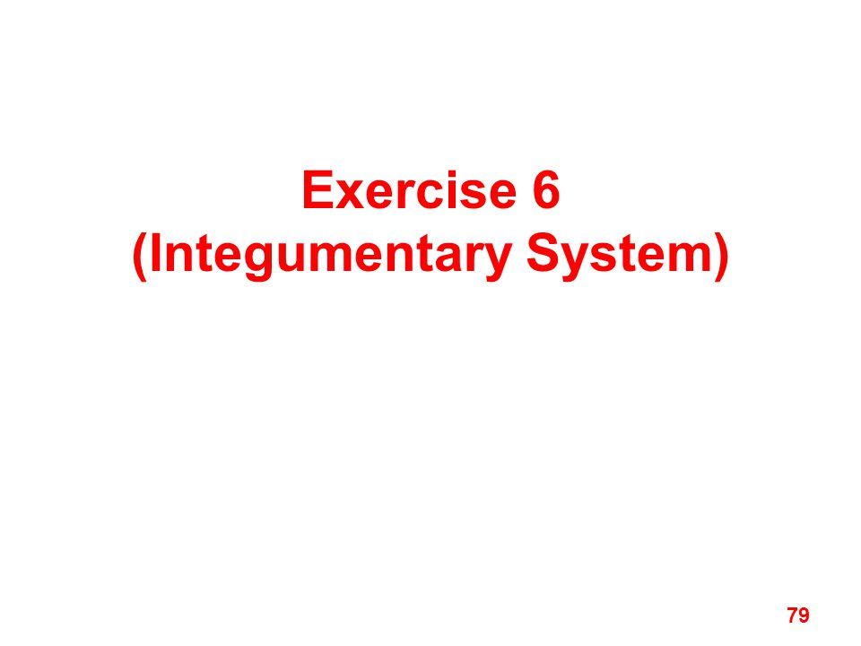 Exercise 6 (Integumentary System) 79