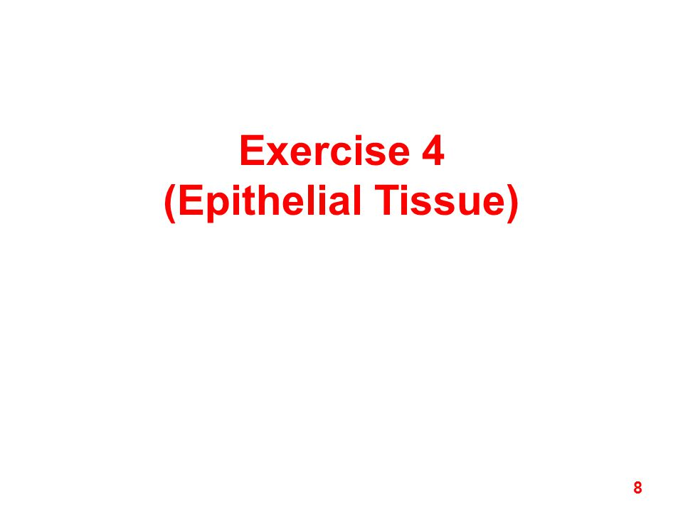 Exercise 4 (Epithelial Tissue) 8