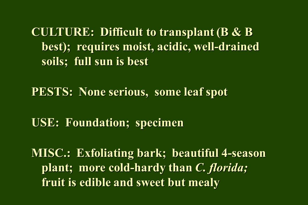 CULTURE: Difficult to transplant (B & B best); requires moist, acidic, well-drained soils; full sun is best PESTS: None serious, some leaf spot USE: F