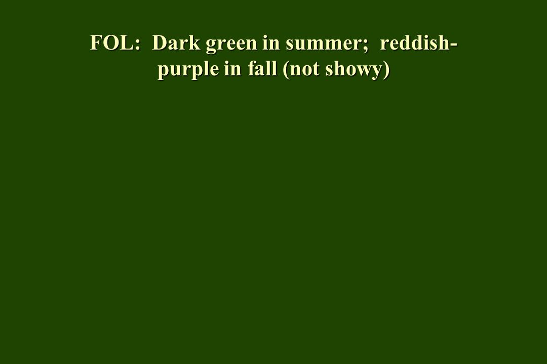 FOL: Dark green in summer; reddish- purple in fall (not showy)
