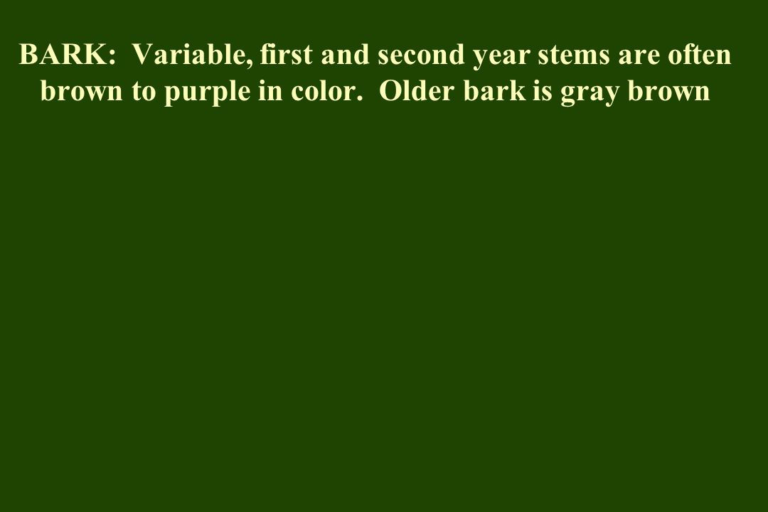 FOL: Glossy dark green in summer; red- purple in fall possible but not likely