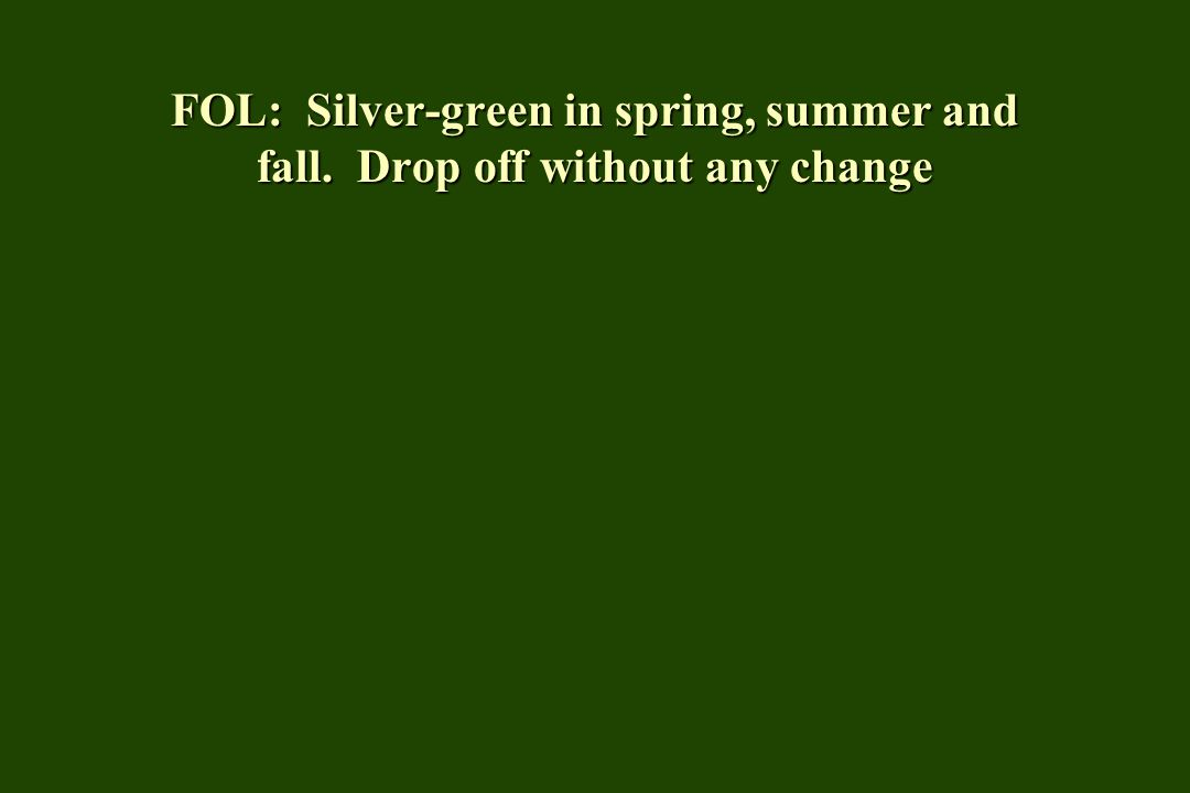 FOL: Silver-green in spring, summer and fall. Drop off without any change