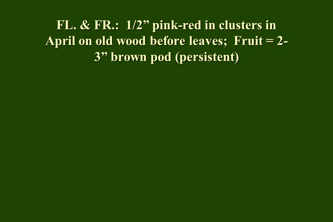 """FL. & FR.: 1/2"""" pink-red in clusters in April on old wood before leaves; Fruit = 2- 3"""" brown pod (persistent)"""