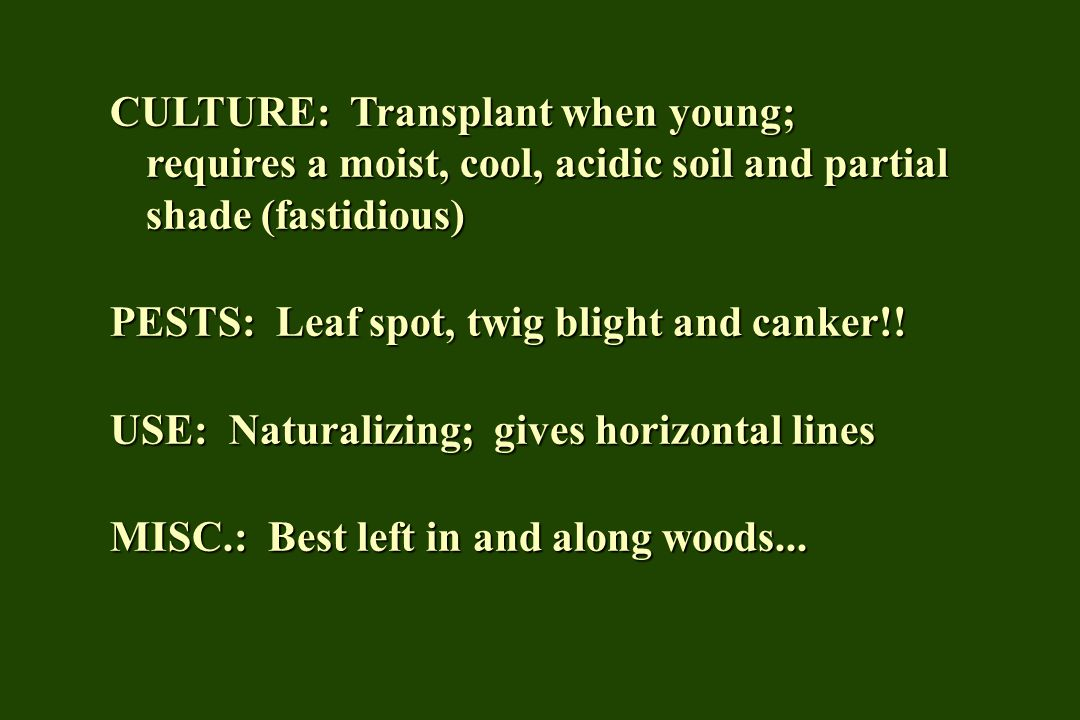 CULTURE: Transplant when young; requires a moist, cool, acidic soil and partial shade (fastidious) PESTS: Leaf spot, twig blight and canker!! USE: Nat