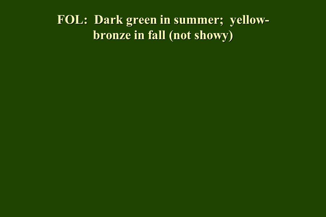 FOL: Dark green in summer; yellow- bronze in fall (not showy)
