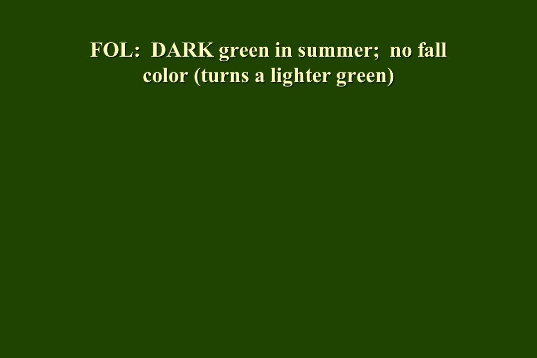 FOL: DARK green in summer; no fall color (turns a lighter green)