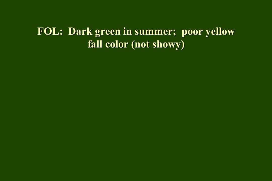 FOL: Dark green in summer; poor yellow fall color (not showy)