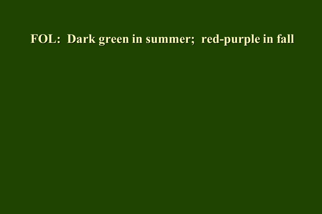 FOL: Medium green in summer; fall color is a poor yellow-brown