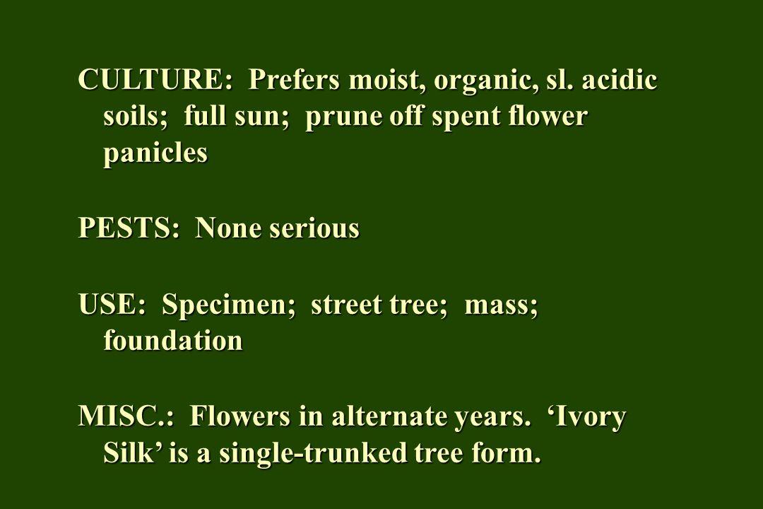 CULTURE: Prefers moist, organic, sl. acidic soils; full sun; prune off spent flower panicles PESTS: None serious USE: Specimen; street tree; mass; fou