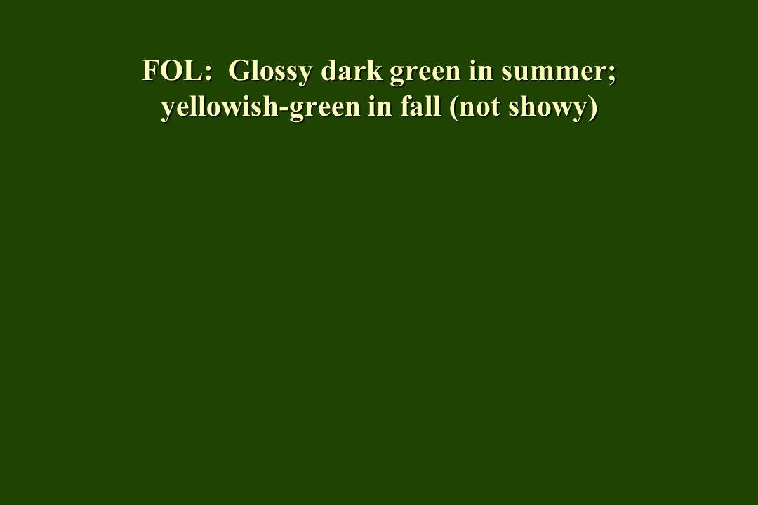 FOL: Glossy dark green in summer; yellowish-green in fall (not showy)