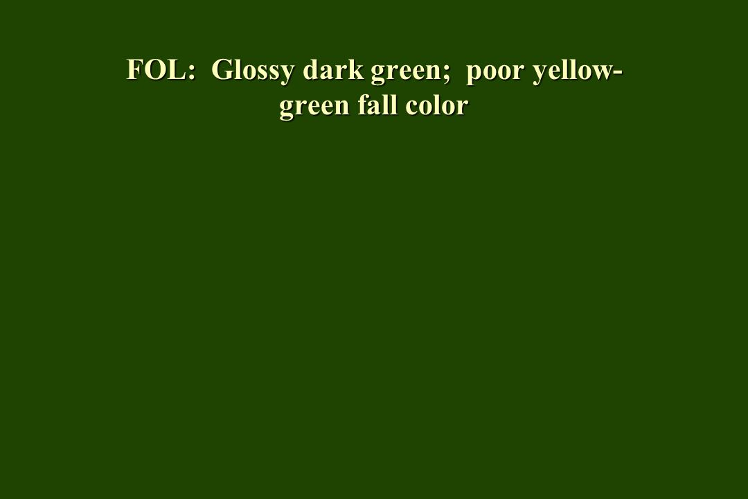 FOL: Glossy dark green; poor yellow- green fall color