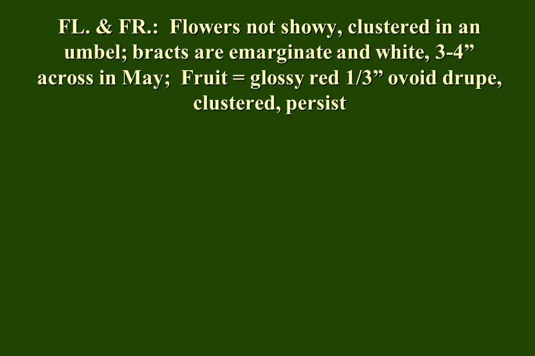 """FL. & FR.: Flowers not showy, clustered in an umbel; bracts are emarginate and white, 3-4"""" across in May; Fruit = glossy red 1/3"""" ovoid drupe, cluster"""