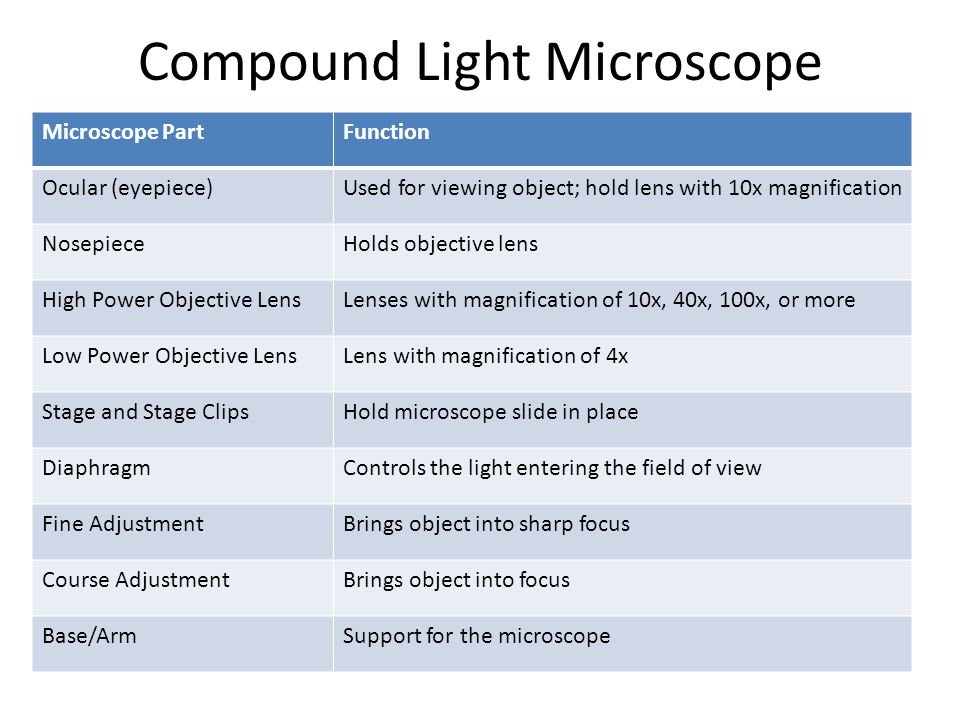 Compound Light Microscope Microscope PartFunction Ocular (eyepiece)Used for viewing object; hold lens with 10x magnification NosepieceHolds objective