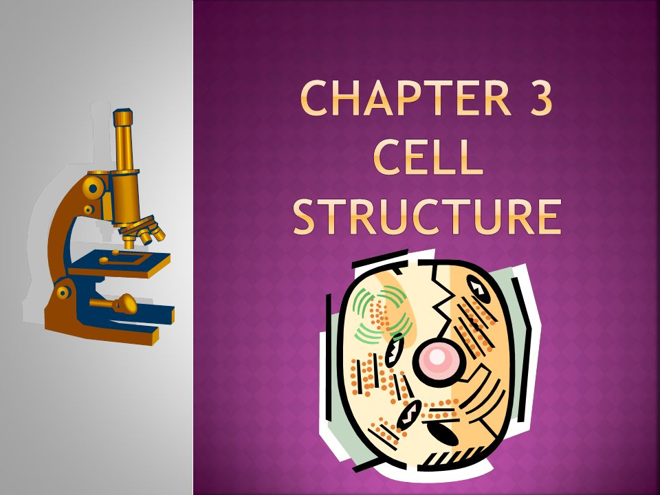 Section 3-1 Cell Size: Magnification: quality of making an image appear larger than actual size Resolution: measure of clarity of an image e- microscopes have ↑ mag/resolution