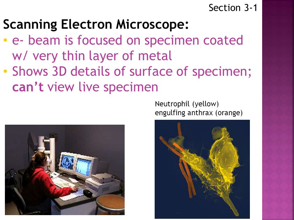 Section 3-1 Scanning Tunneling Microscope: Needle-like probe measures differences in voltage caused by e- that leak, or tunnel, from surface of object being viewed Shows 3D details of surface of specimen Live specimens can be viewed e- surrounded by 48 iron atoms