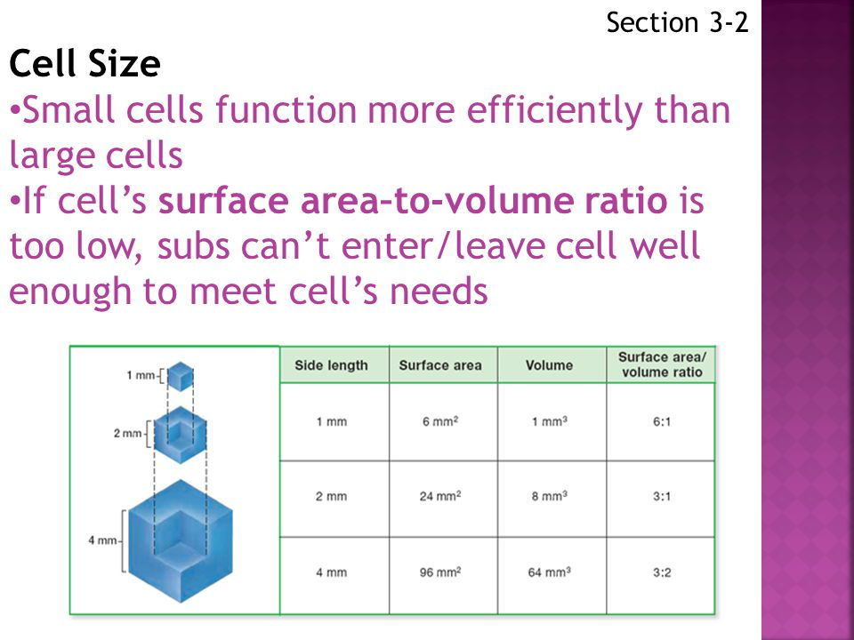 Section 3-2 Cell Theory has 3 parts: 1.All LT are made of 1 or more cells 2.Cells are basic units of structure/function in organisms 3.All cells arise from existing cells All cells have: Cell membrane Cytoplasm Cytoskeleton DNA Ribosome