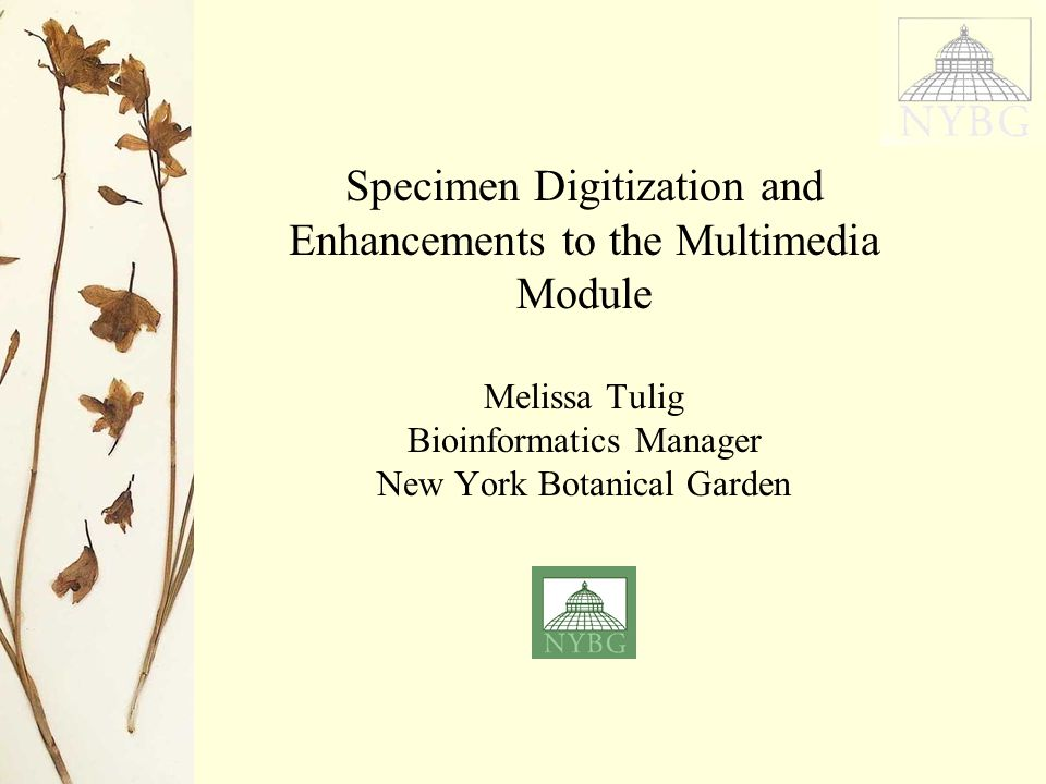 Specimen Digitization and Enhancements to the Multimedia Module Melissa Tulig Bioinformatics Manager New York Botanical Garden