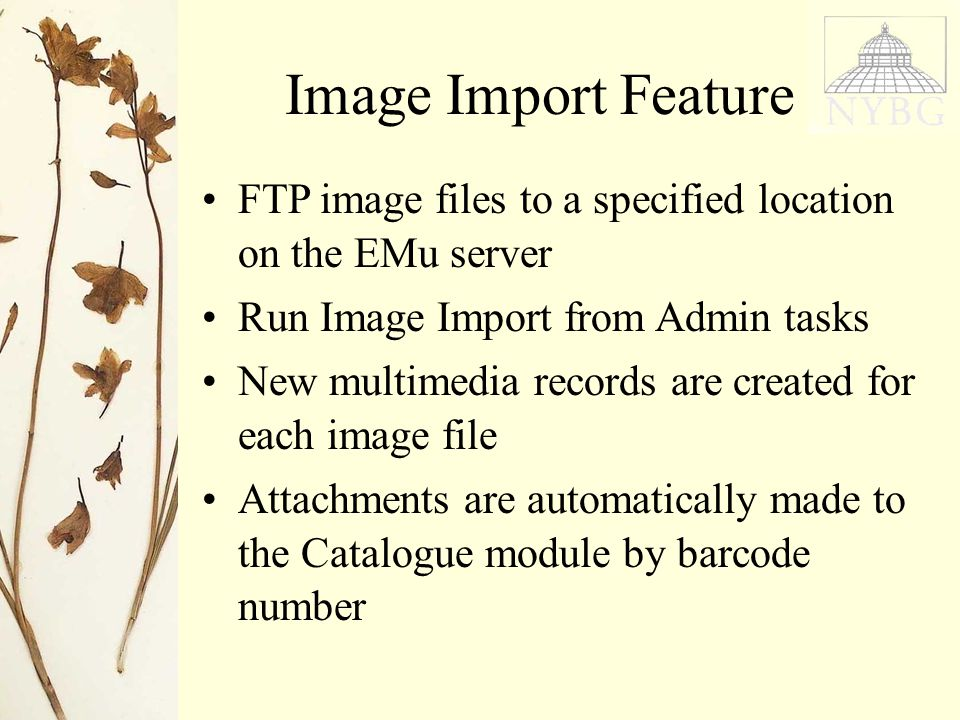 FTP image files to a specified location on the EMu server Run Image Import from Admin tasks New multimedia records are created for each image file Attachments are automatically made to the Catalogue module by barcode number Image Import Feature