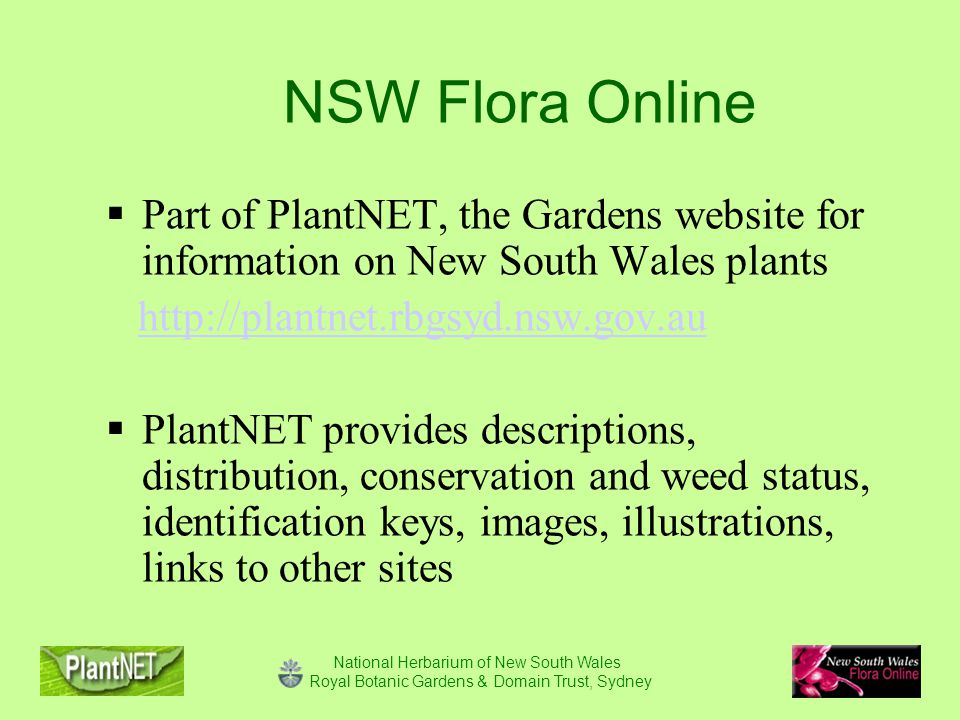 National Herbarium of New South Wales Royal Botanic Gardens & Domain Trust, Sydney NSW Flora Online  Part of PlantNET, the Gardens website for information on New South Wales plants http://plantnet.rbgsyd.nsw.gov.au  PlantNET provides descriptions, distribution, conservation and weed status, identification keys, images, illustrations, links to other sites