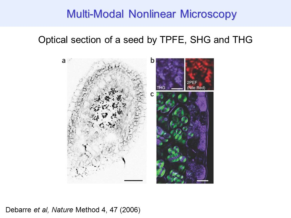 Debarre et al, Nature Method 4, 47 (2006) Optical section of a seed by TPFE, SHG and THG THG images of biological specimen Multi-Modal Nonlinear Microscopy