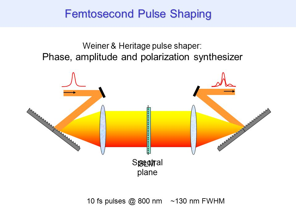 THG images of biological specimen Femtosecond Pulse Shaping SLM Weiner & Heritage pulse shaper: Phase, amplitude and polarization synthesizer Spectral plane