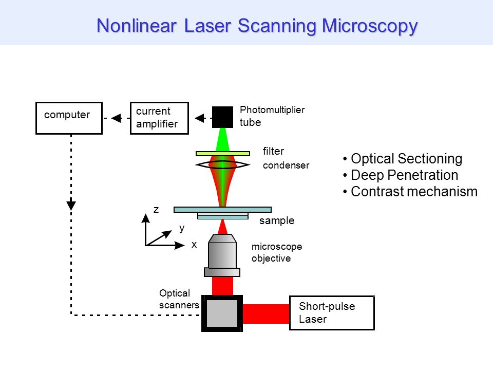 1.Optical sectioning (all) 2.Reduced photobleaching (TPFE) 3.New contrast mechanisms, no labeling, live specimens (SHG, THG, CARS..) 4.Reduced scattering, deep imaging (TPFE, SHG, THG) 5.Molecular imaging (CARS) 6.Enhanced resolution (STED) Why Nonlinear Microscopy