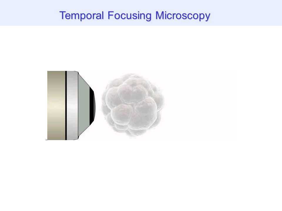 THG images of biological specimen Temporal Focusing Microscopy