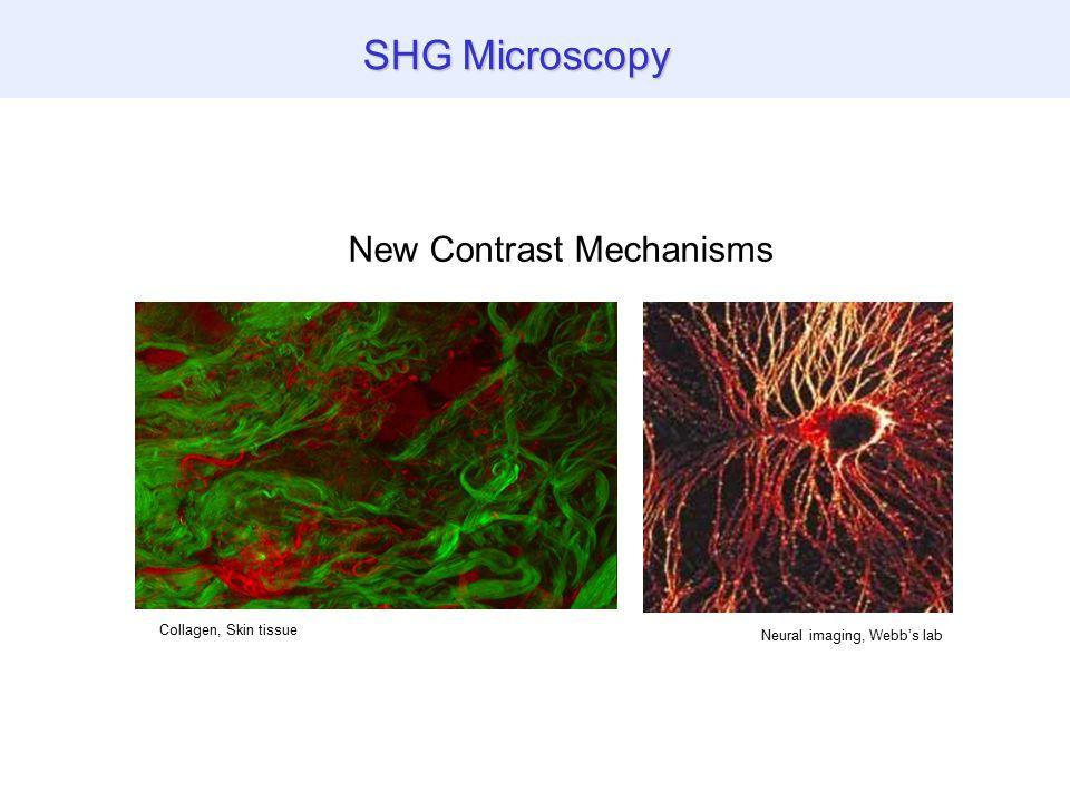 SHG Microscopy Collagen, Skin tissue Neural imaging, Webb's lab New Contrast Mechanisms