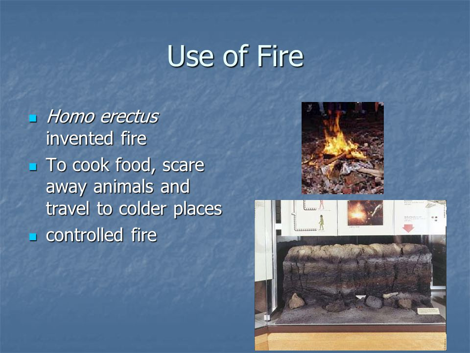 Use of Fire Homo erectus invented fire Homo erectus invented fire To cook food, scare away animals and travel to colder places To cook food, scare awa