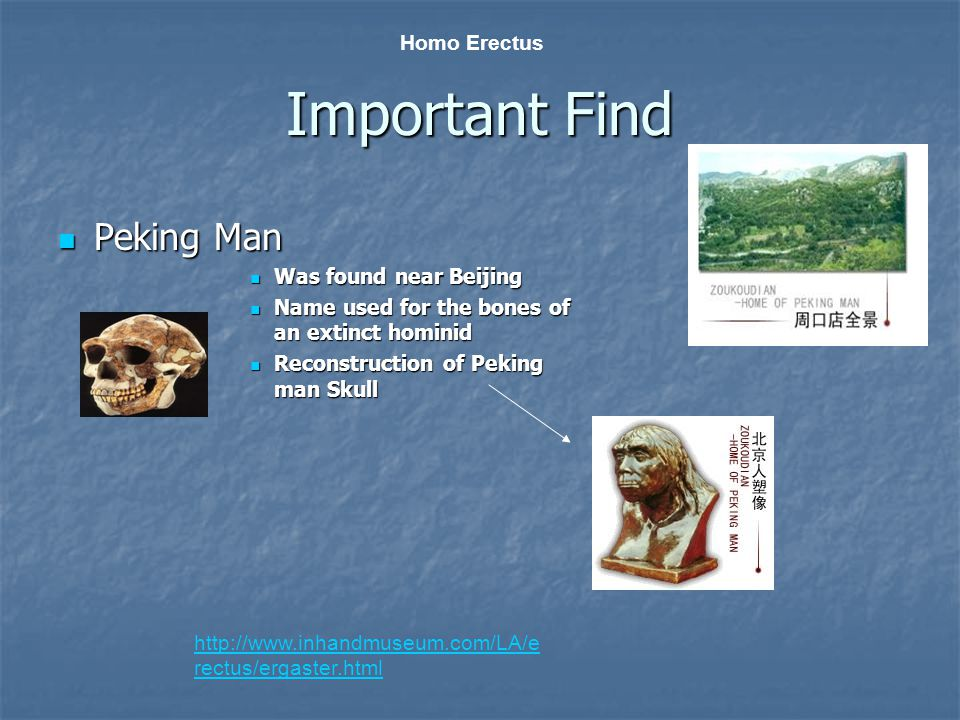 Important Find Peking Man Peking Man Was found near Beijing Was found near Beijing Name used for the bones of an extinct hominid Name used for the bon